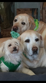 North Landing Realty, Inc.'s Office Mascots